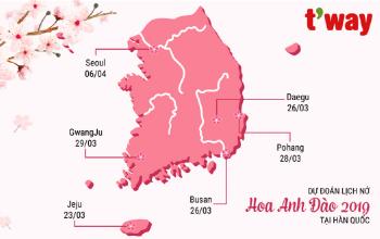 Dự báo lịch nở hoa anh đào tại Hàn Quốc 2019-02